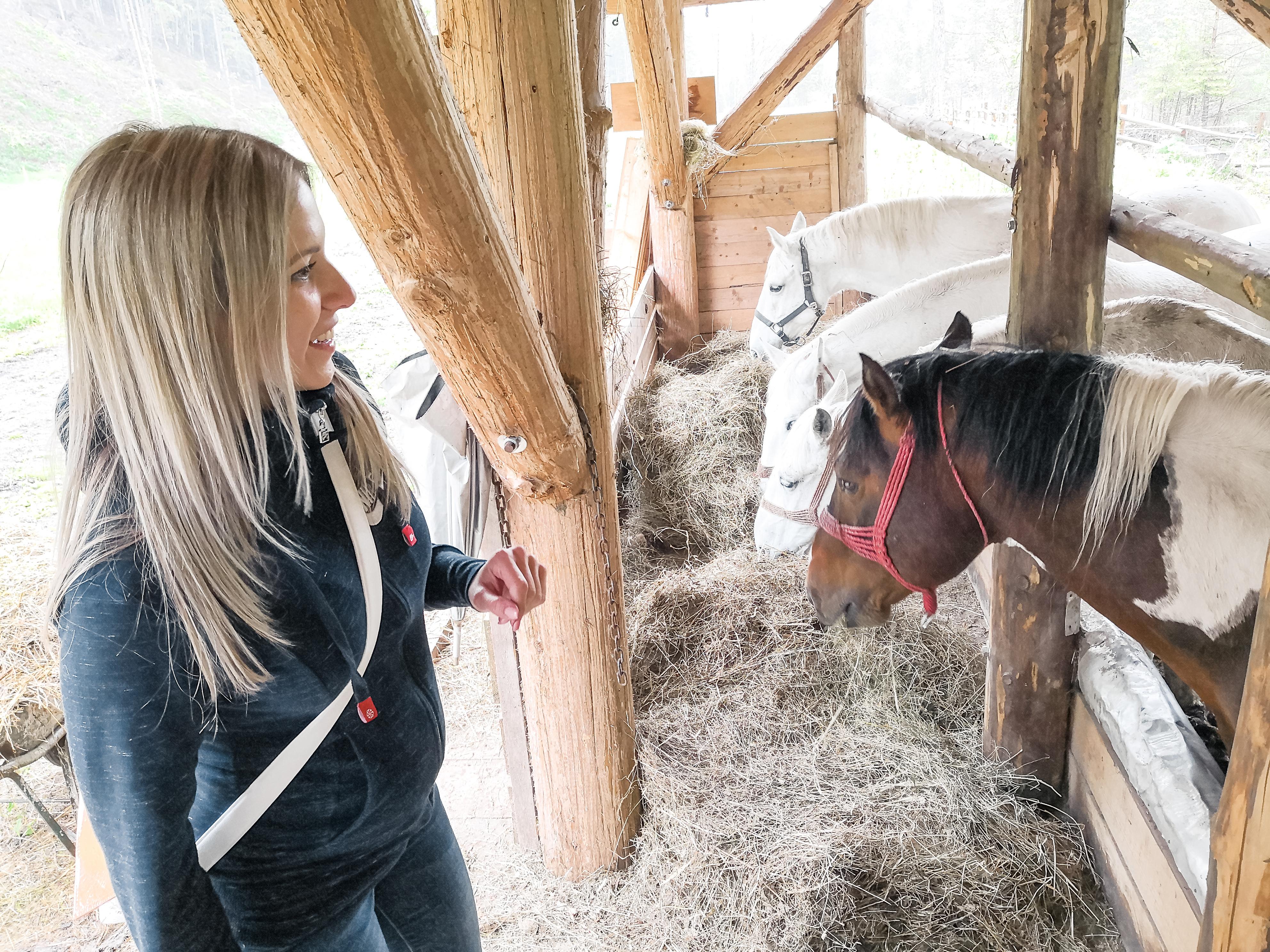 Hranjenje konjev Logarska dolina